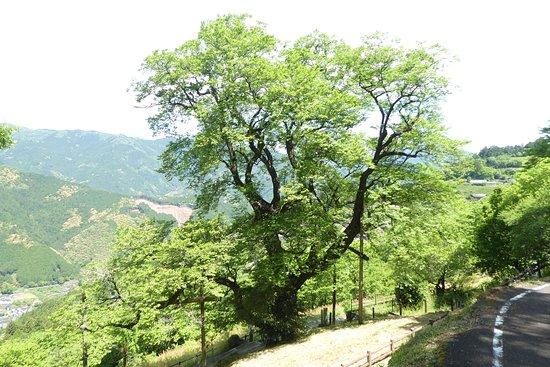 Hyotan Sakura Park