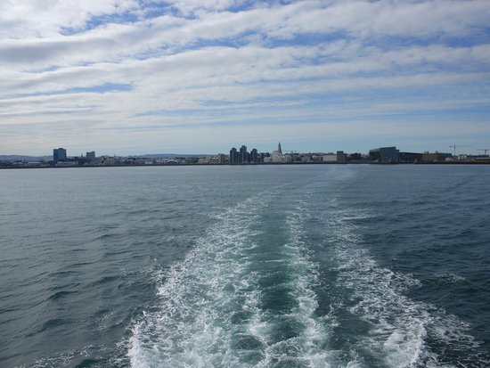 Whale Watching in Luxury from Reykjavik: setting sail from Reykjavik