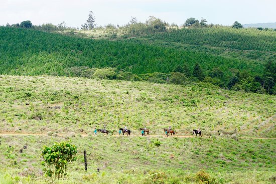 The rides vary from Zomba Plateau Stables to Viphya Plateau stables.   The Viphya is vast and has a great variety of rides from a one hour to a five hour ride.   Beginners feel safe being led if need be.