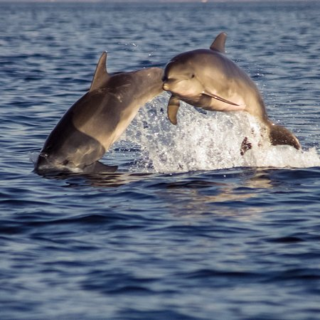 Mother and calf jumping