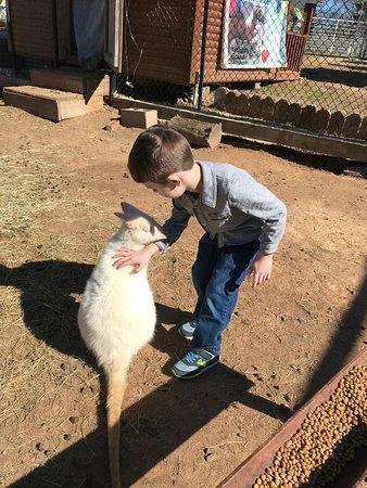 Mini 'S' Exotic Zoo: Albino Wallaby
