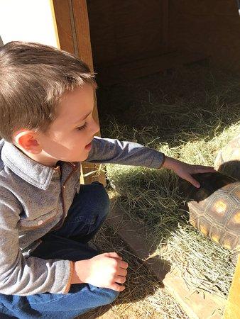 Mini 'S' Exotic Zoo: Tortoise