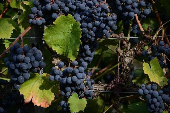 Vejby Vingaard Marani Wine Cellar
