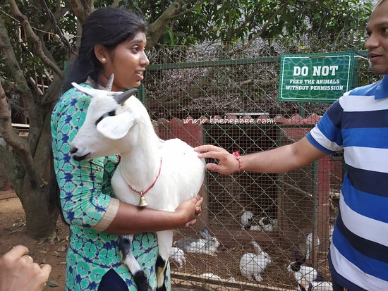 Prani, The Pet Sanctuary: Goat