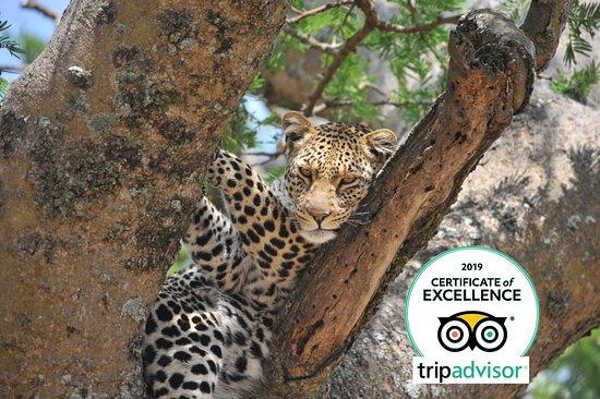Proud African Safaris
