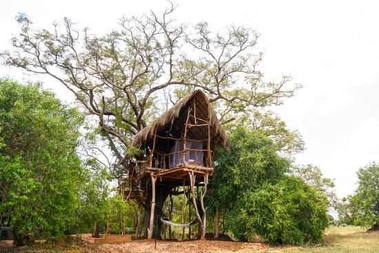 The Ibis Wilpattu: The Tree House Room