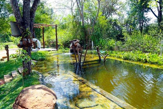 The Ibis Wilpattu: The Organic Pool
