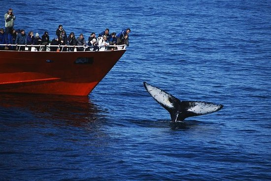Classic Whale Watching | L'originale