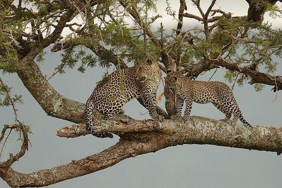 ROY'S Classic Tanzania Safari-6