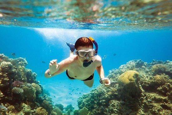 Pattaya: Únase al Tour Coral...