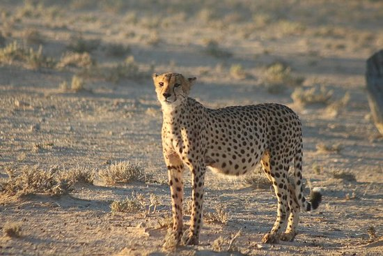 05 Day Kgalagadi Transfrontier Park...