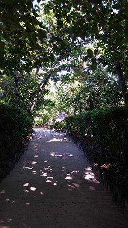 Navini highway (sand pathway)