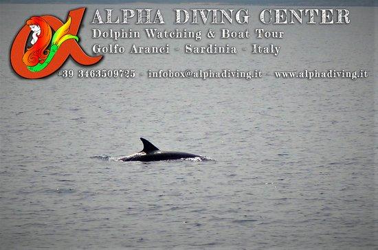 Alpha Diving Center - La Casa delle Sirene