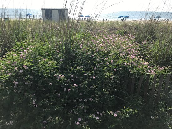 Flowers at the edge of Rehoboth Beach