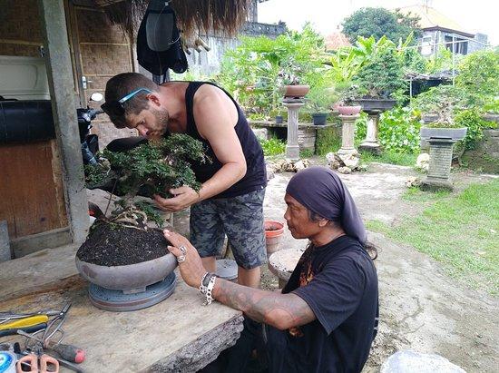 Bali Akah Bonsai Class 사진
