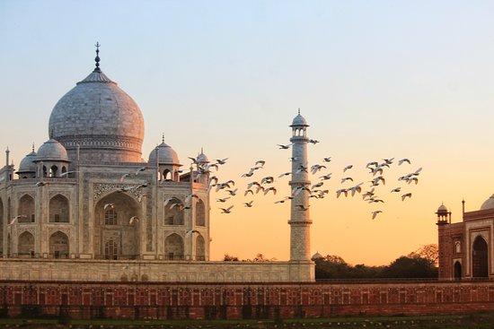 Taj Tour Trip