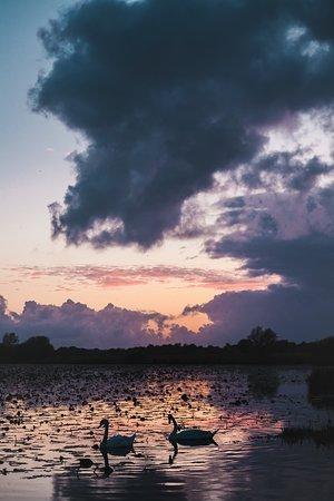 Coucher de soleil sur le lac de Grand-Lieu... les cygnes sont apparus et sont restés très calmes :) J'ai écrit un article avec des spots à explorer près de Grand-Lieu.  ARTICLE : http://www.bien-voyager.com/loire-atlantique-7-sports-grand-lieu/ #loireatlantique #france #voyage