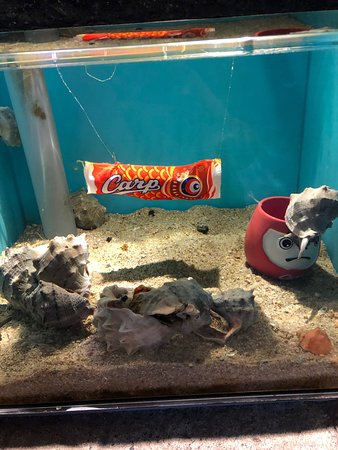 生まれたばかりのセトちゃんもいました。小さめの水族館ですが、ゆったりとした雰囲気が大好きです。