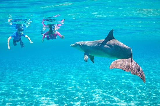 Paradise Travel Excursions