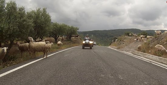 and sheep