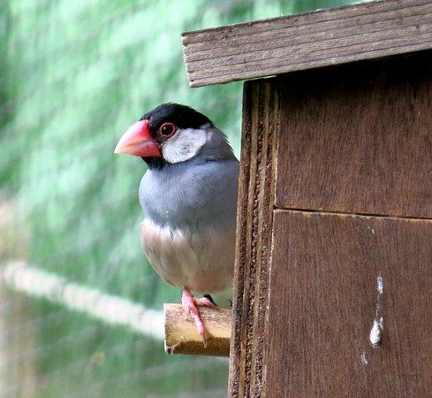 voor het nest