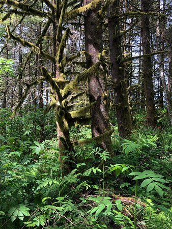 5e28e29ef15 Poo Poo Point - Chirico Trail (Issaquah) - 2019 All You Need to Know ...