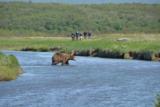 Flightseeing Tour and Wilderness Bear Viewing in an Alaska National Park: Alpha male