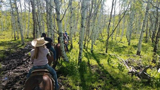 Del's Triangle 3 Ranch: Beautiful Aspens