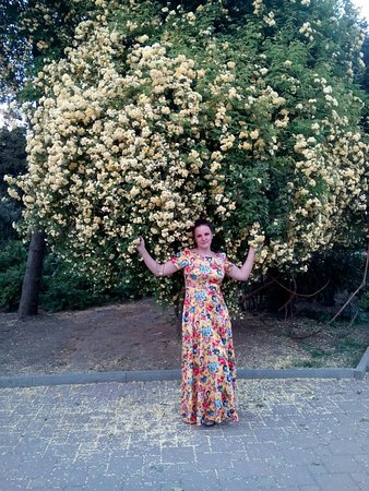 очаровательные плетистые розы