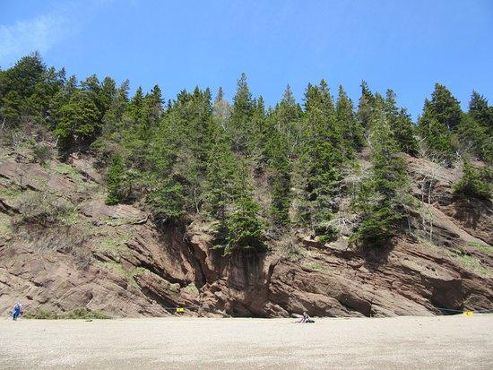 Hopewell Rocks Admission: Sea Cliffs