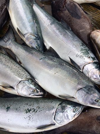Homer Ocean Charters: Salmon, anyone?