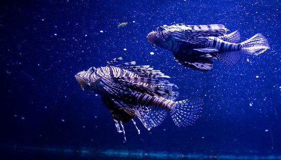 Mieszkańcy akwarium