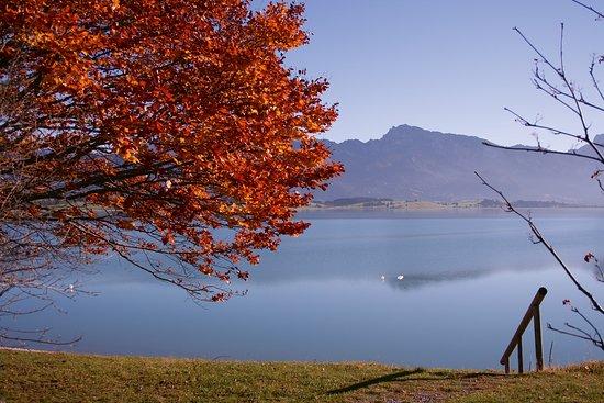 Forggensee bei Dietringen im Herbst