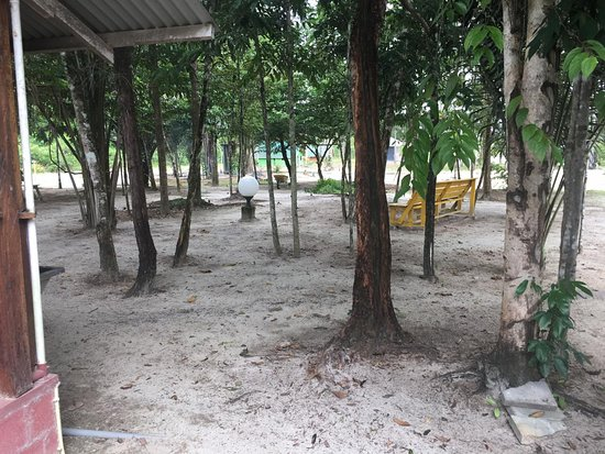 Para District, ซูรินาเม: Gran Swietdjaarie, trees for our fieldbed, hammocks, space to relax
