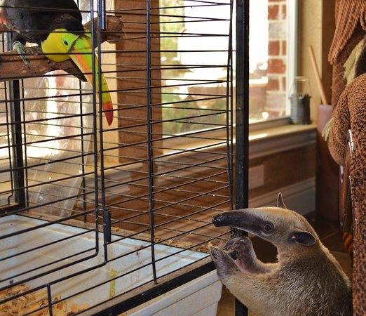 Mineola, TX: Mandu telling the Toucan Hello