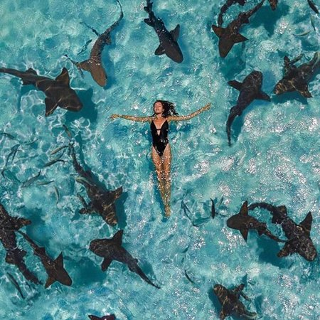 Out Islands: Avreste abbastanza coraggio? 😜 🦈  Eppure i nurse sharks di Compass Cay sono innocui e carini, davvero!  Provare per credere...