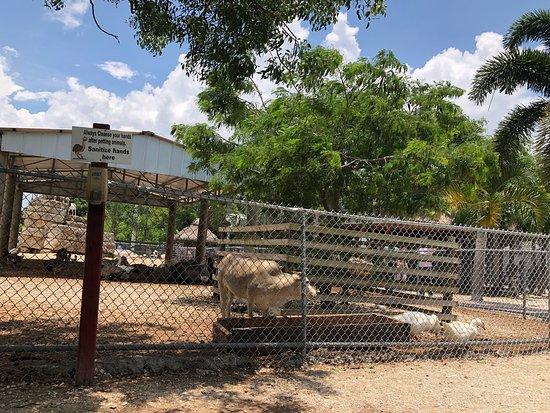 Fort Lauderdale, FL: Hamestead, florida  Robert is Here. Lugar pitoresco, arborizado, frutas frescas da fazenda. Local tradicional desde 1959! Vale conhecer!