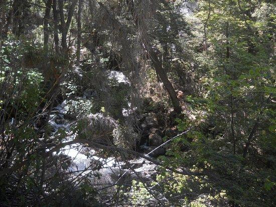 Parque Nacional Los Alerces: Cascada Irigoyen desde el camino