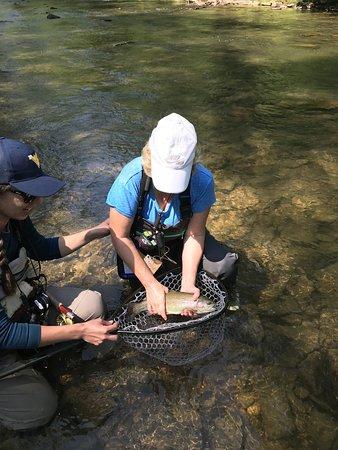 Knapp's Creek Trout Lodge: Knapps Creek Trout!
