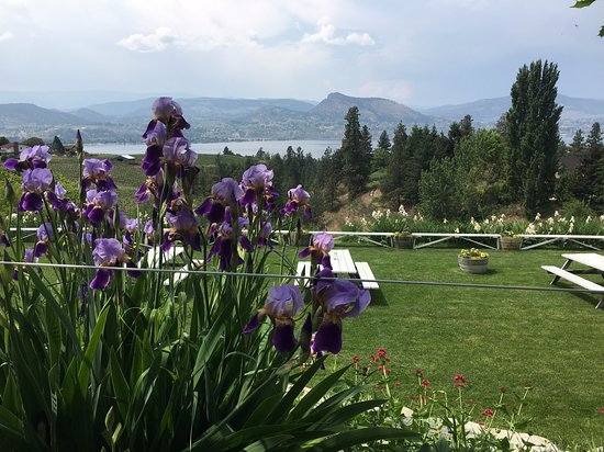 Naramata, Canada: The view from the patio