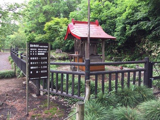 Shimizudonokami Park