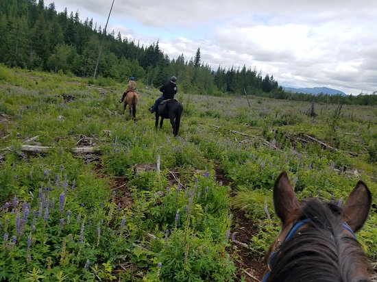 Mountain Horse Adventures
