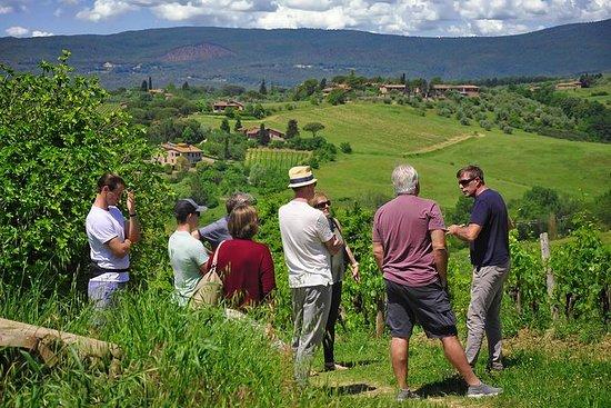 Weintour & Weinverkostung in Siena