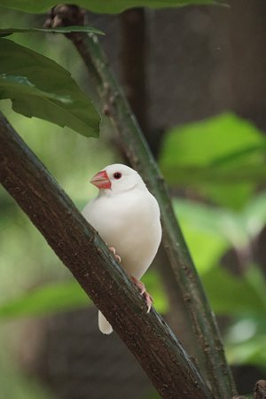 白文鳥です。ここにはたくさんいます♪