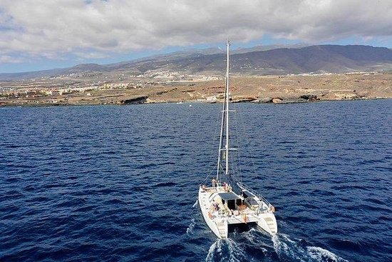 Tenerife Whale Watching and Relaxing...