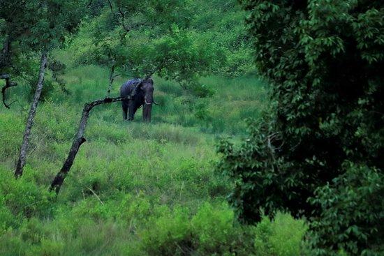 Kattikkulam, Inde : Safari from Nanchi
