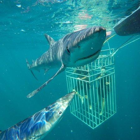 Sea Turtle Dive Charters