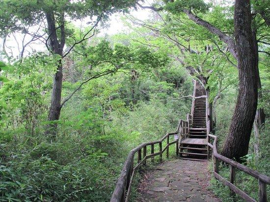森の中の木道 (しっかり整備されています)