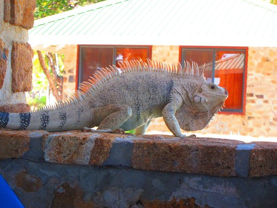 Palm Island Resort & Spa - All Inclusive: A visitor to our patio