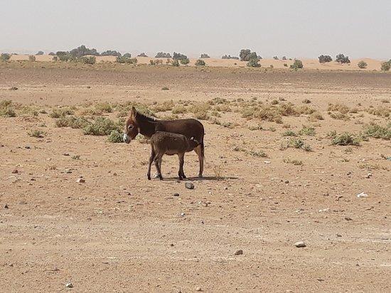 Desert tour .